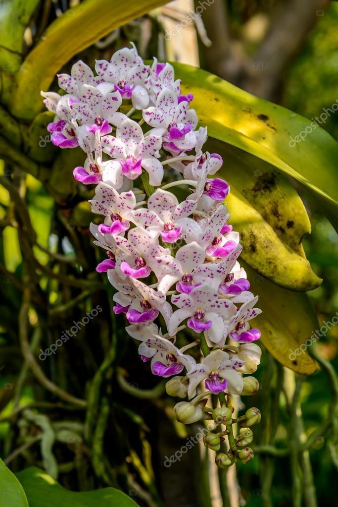 Bellissima orchidea da giardino foto stock for Nuovo stelo orchidea