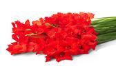 Fotografie červené květy izolovaných na bílém