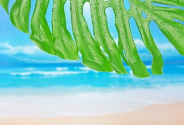 Tropical leaf with water drops against a beach