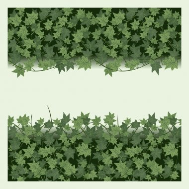 Ivy seamless  border