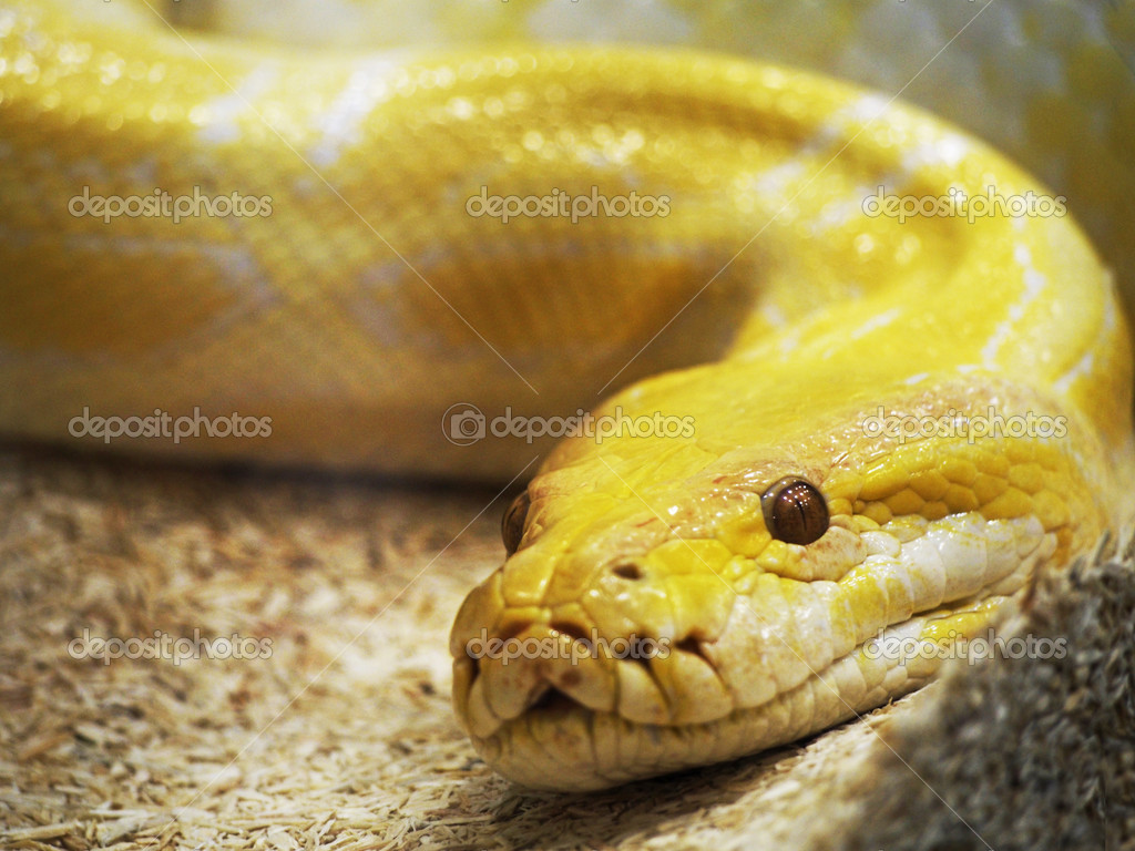 Images Of Cake And A Snake