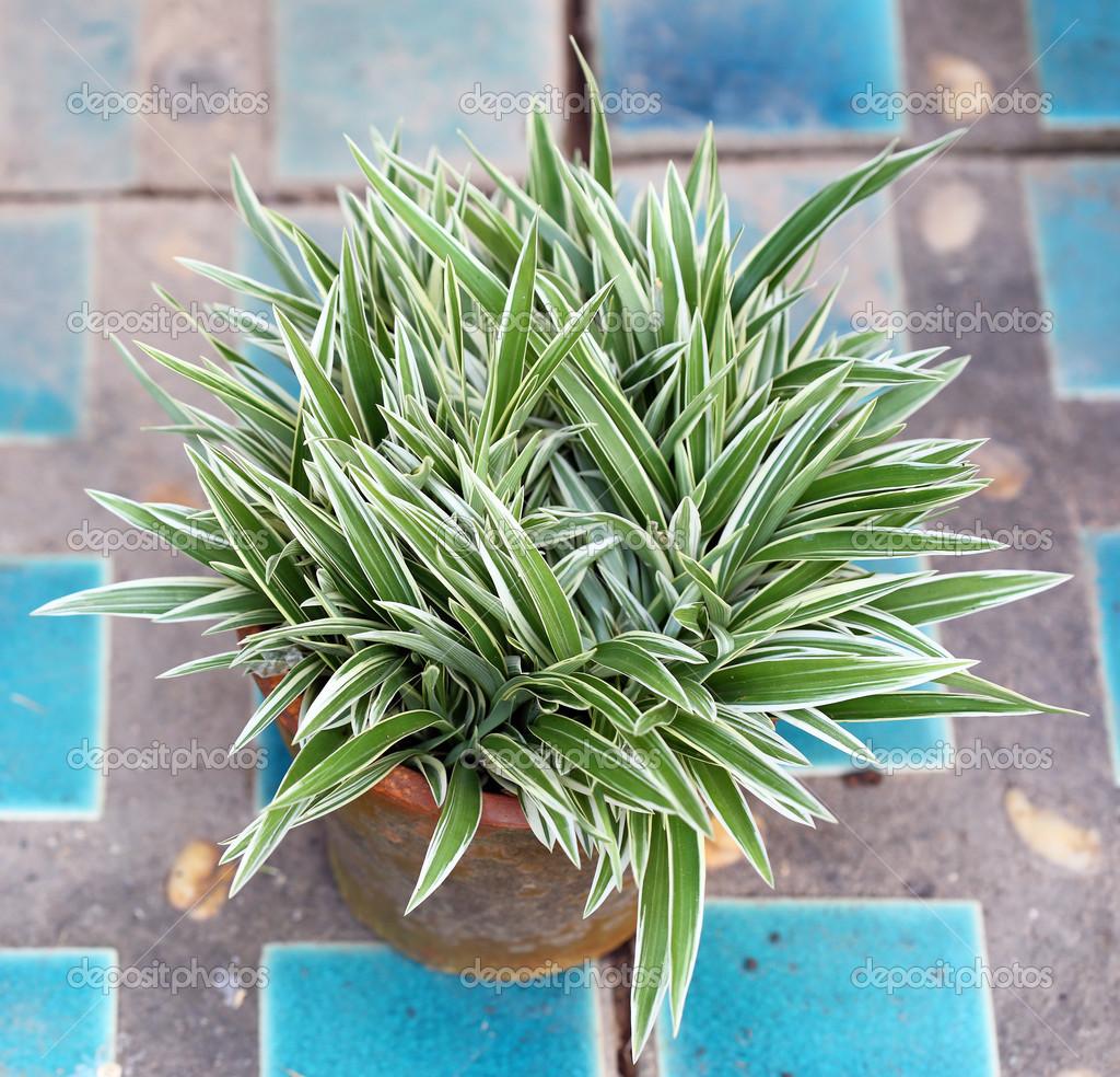 Plantas ornamentales foto de stock wittybear 32111871 for 20 plantas ornamentales