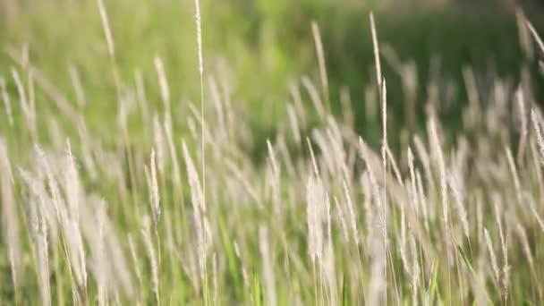 tráva v poli