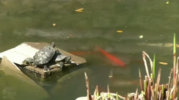 želvy a ryby