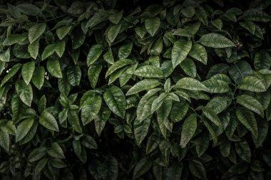 Dark leaves background
