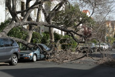 Car trapped under fallen tree