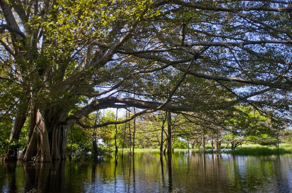 Amazon River. Brazil