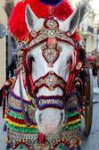 zdobené koně