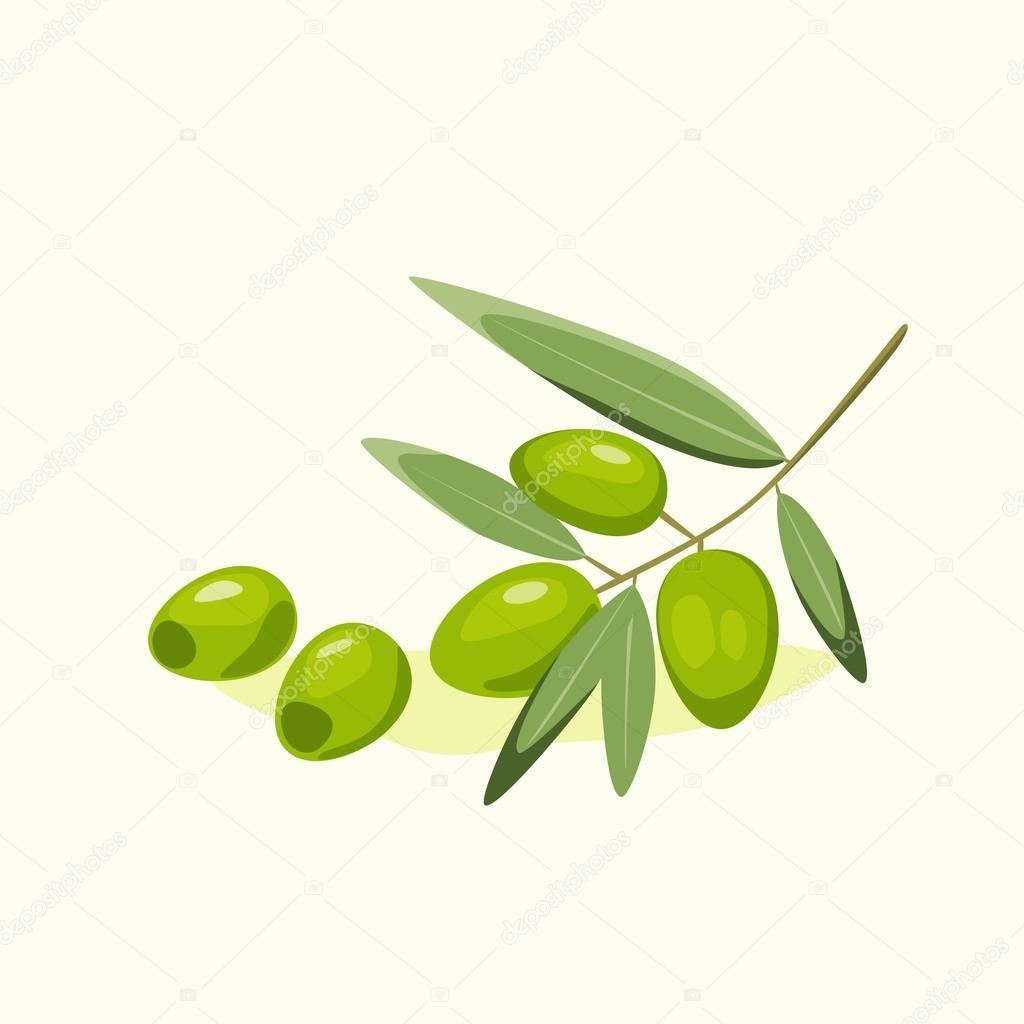 оливковая ветвь — Векторное изображение © nadia1992 #37068325 Оливковая Ветвь Вектор