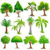 strom kolekce