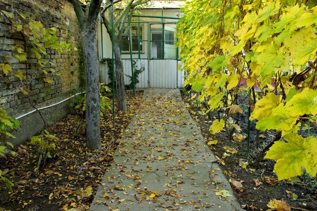 Autumn Path to Garden House with Vine and Falling Leaves