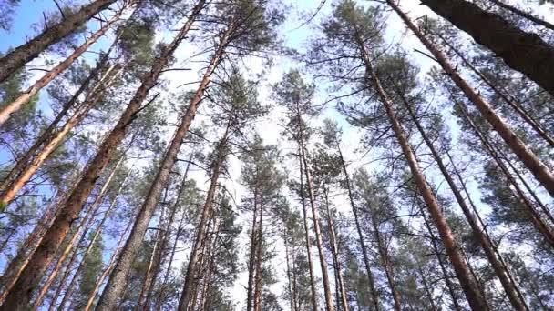 fák imbolygott az ég ellen.