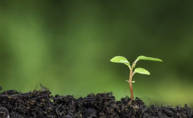 Close up of a plant sprouting from the ground with vivid green bokeh background