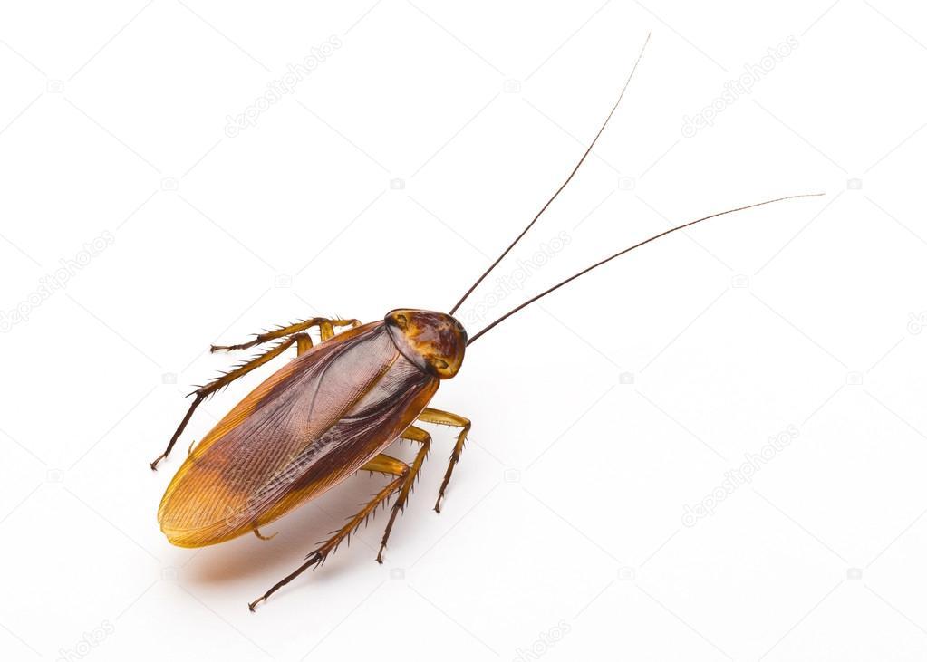 Chiuda in su scarafaggio raccapricciante disgusto brutto insetto
