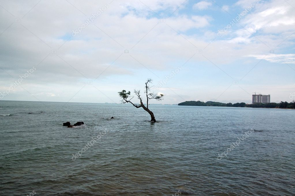 Lonely tree in the water