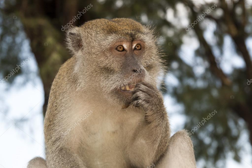 Scared monkey