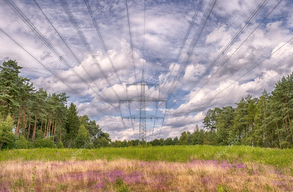 Electricity poles, landscape with blue sky and heide flowers, green grass