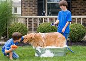 Fotografie Jungs mit Hund ein Bad