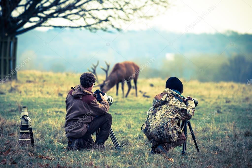Photographers taking photo of deer