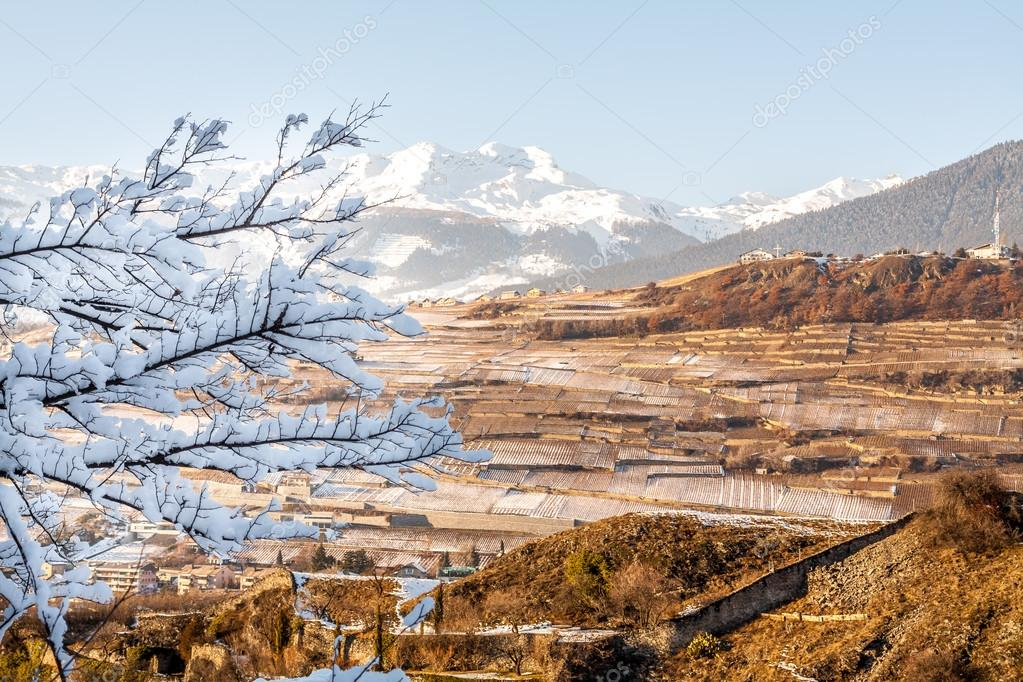Panoramic view of Sion vineyards in Switzerland