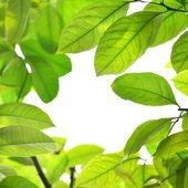 Fotografia foglie verde cornice