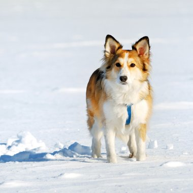 Cute young dog on snow