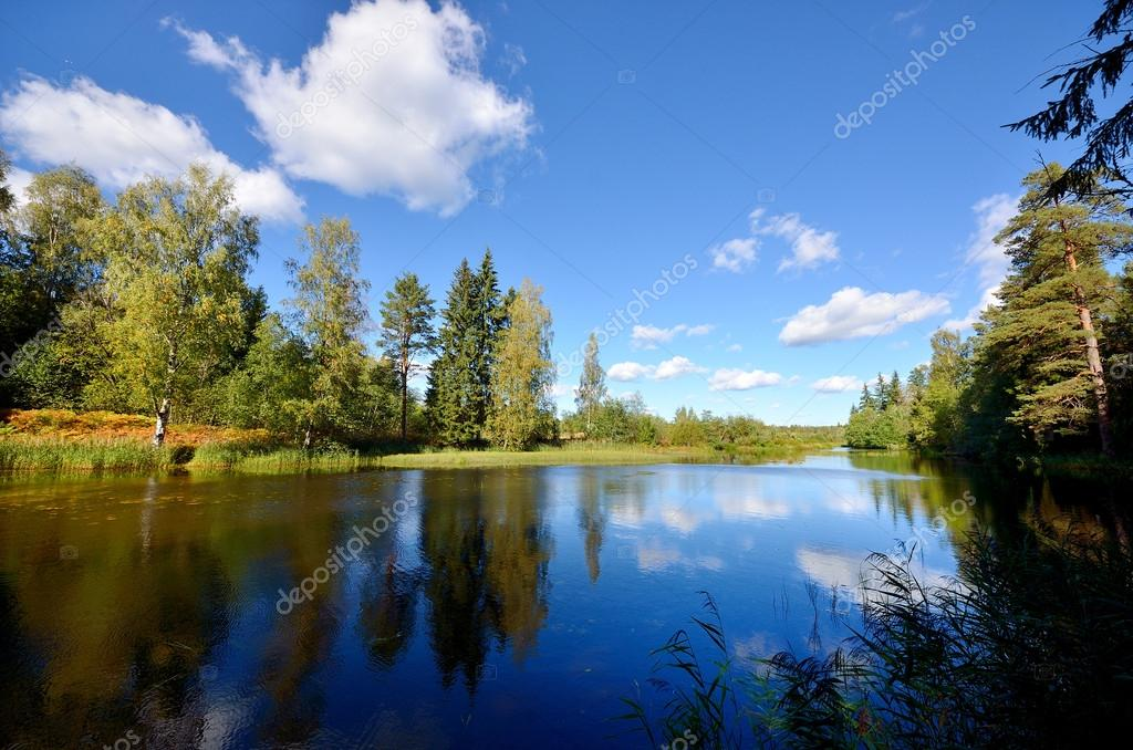 Фотообои River and forest scene in Fall