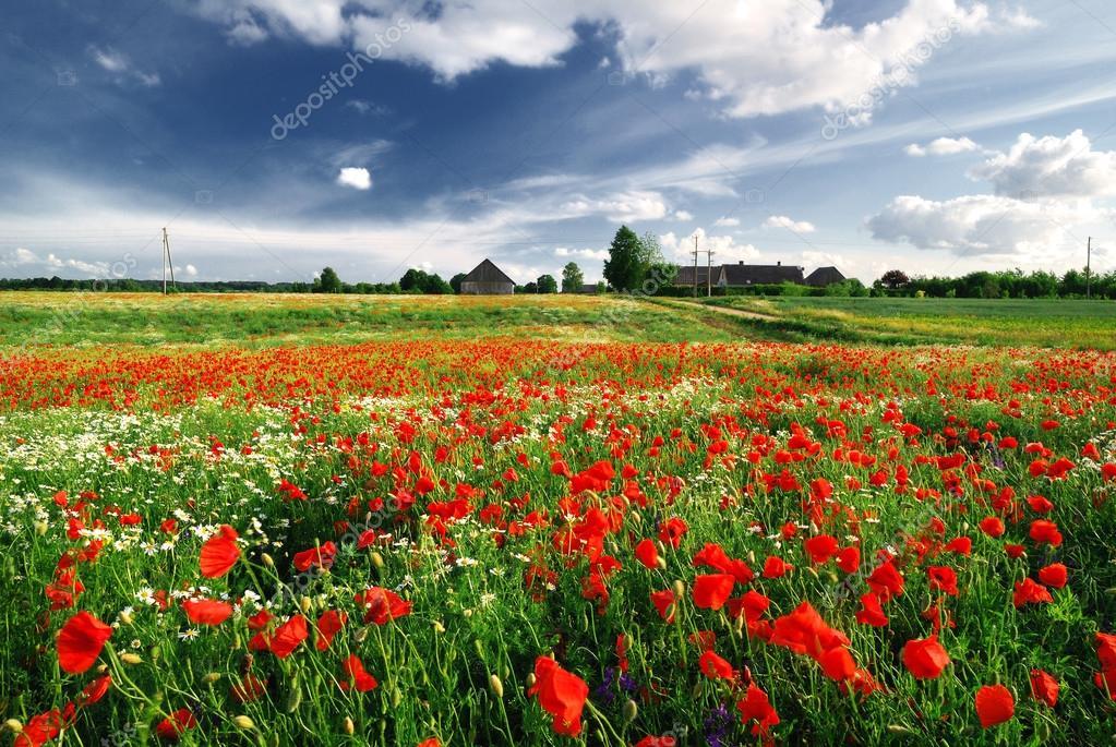 Un campo di papaveri e una casa di campagna in lettonia for Piani di casa con campo sportivo al coperto