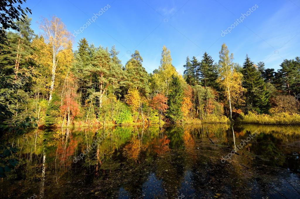 Фотообои Реки и сцена отражения лесу осенью