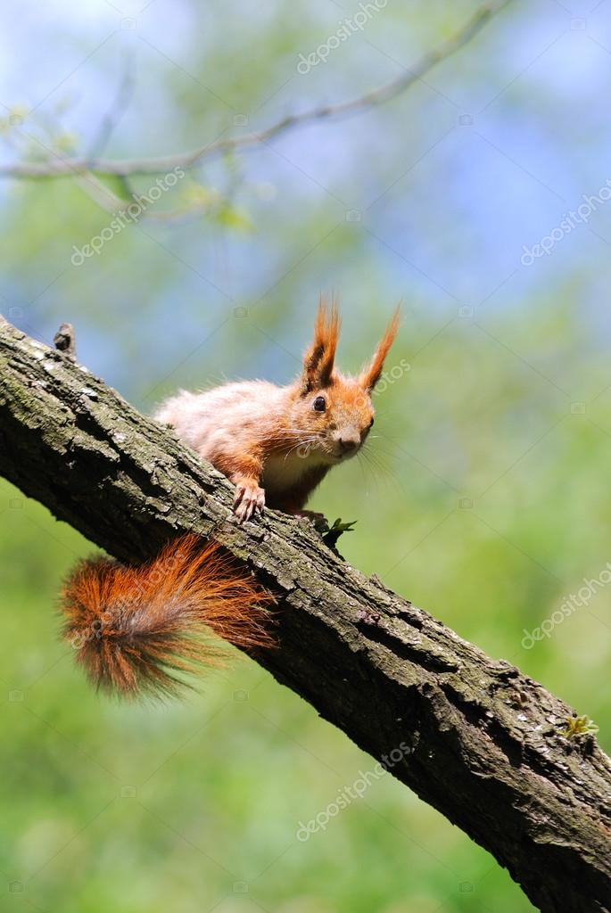 Cute orange squirrel standing on the grass with flowers stock vector