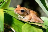 barevné žáby v teráriu