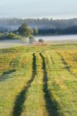 Fotografie Rural field covered with morning fog