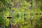 Fényképek erdei tó tükrözi