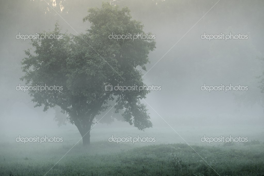 Mystical tree silhouette in fog