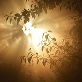 Morgensonne im Laub der Bäume