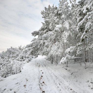 Winter wonderland in snow