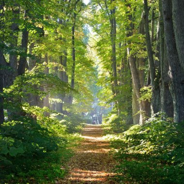 Rural gravel road (alley) through mighty green linden trees. Soft sunlight, sunbeams. Fairy forest landscape. Picturesque scenery. Pure nature. Art, hope, heaven, loneliness, wilderness concepts