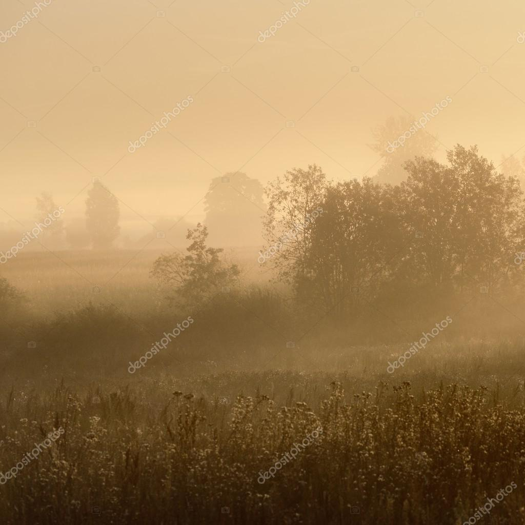 Mystical trees  in fog at lawn