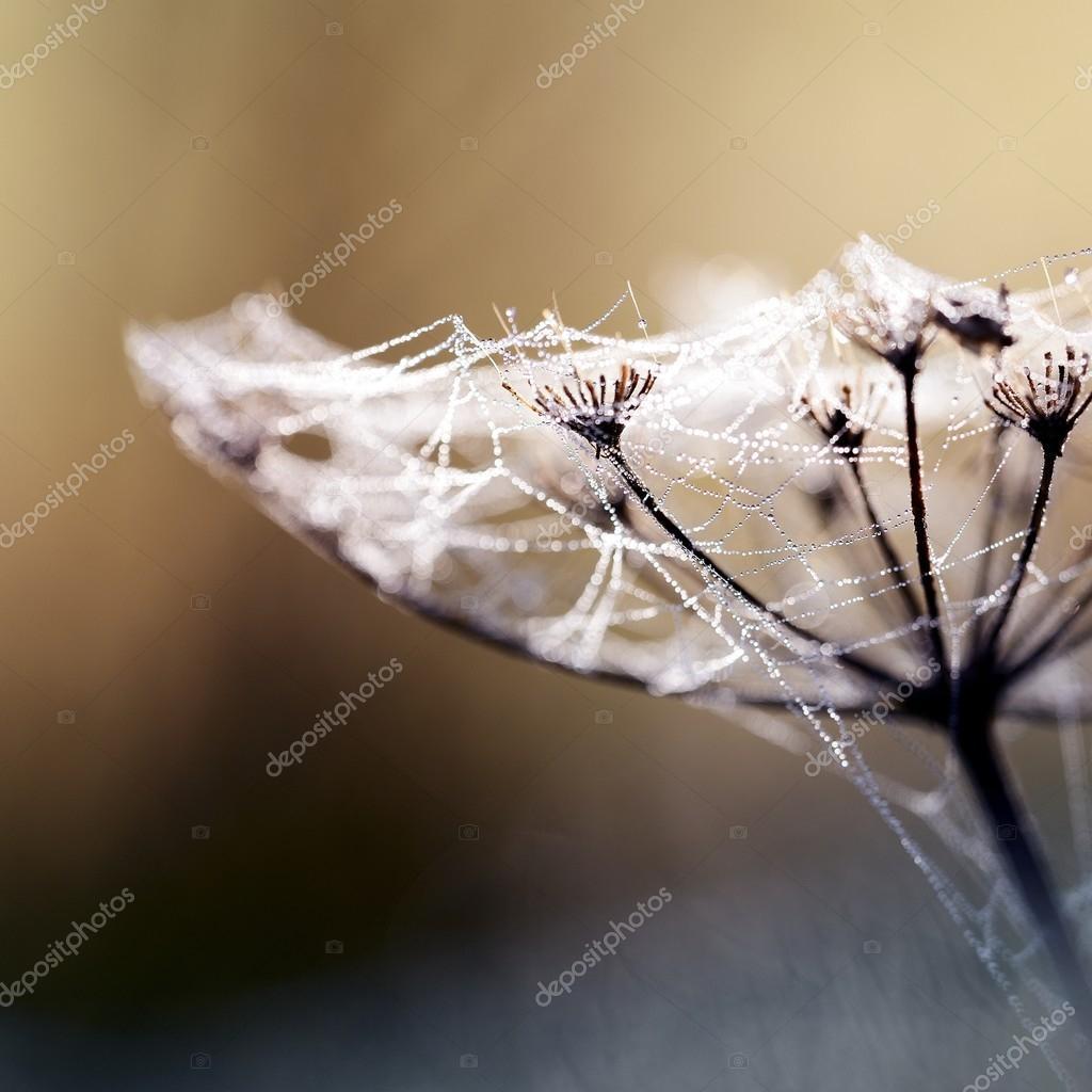 Beautiful spider web