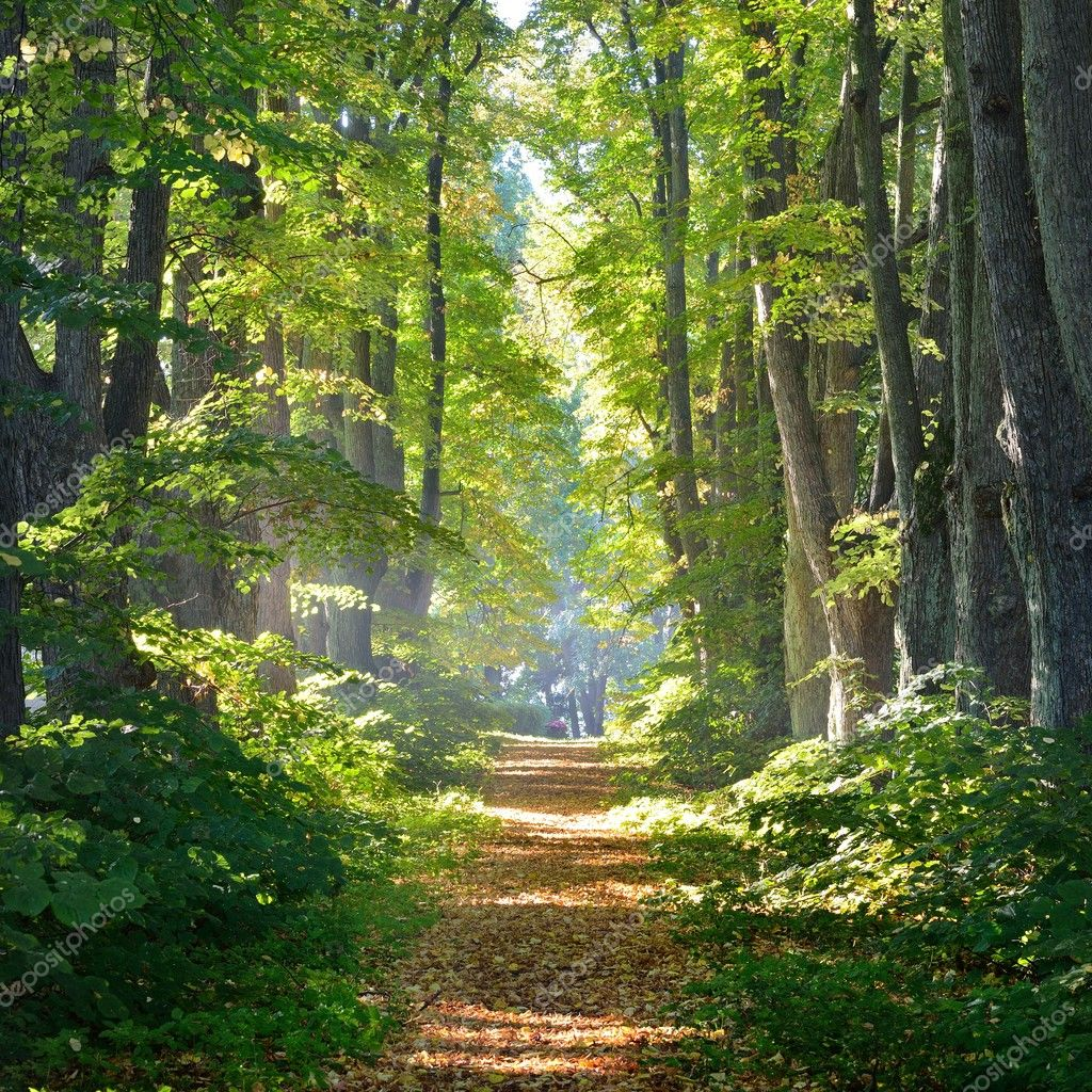 Фотообои Rural gravel road (alley) through mighty green linden trees. Soft sunlight, sunbeams. Fairy forest landscape. Picturesque scenery. Pure nature. Art, hope, heaven, loneliness, wilderness concepts