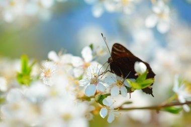 """Картина, постер, плакат, фотообои """"butterfly feeding on a blooming tree"""", артикул 50522361"""