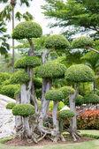 Trpasličí strom