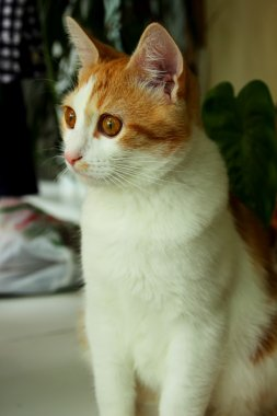 Kitten, looking surprised and interest