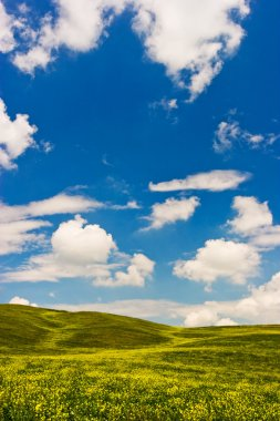 Landscape : Green field with yellow flowers, blue sky and big white fluffy clouds. Val D'Orcia - Tuscany, Italy stock vector