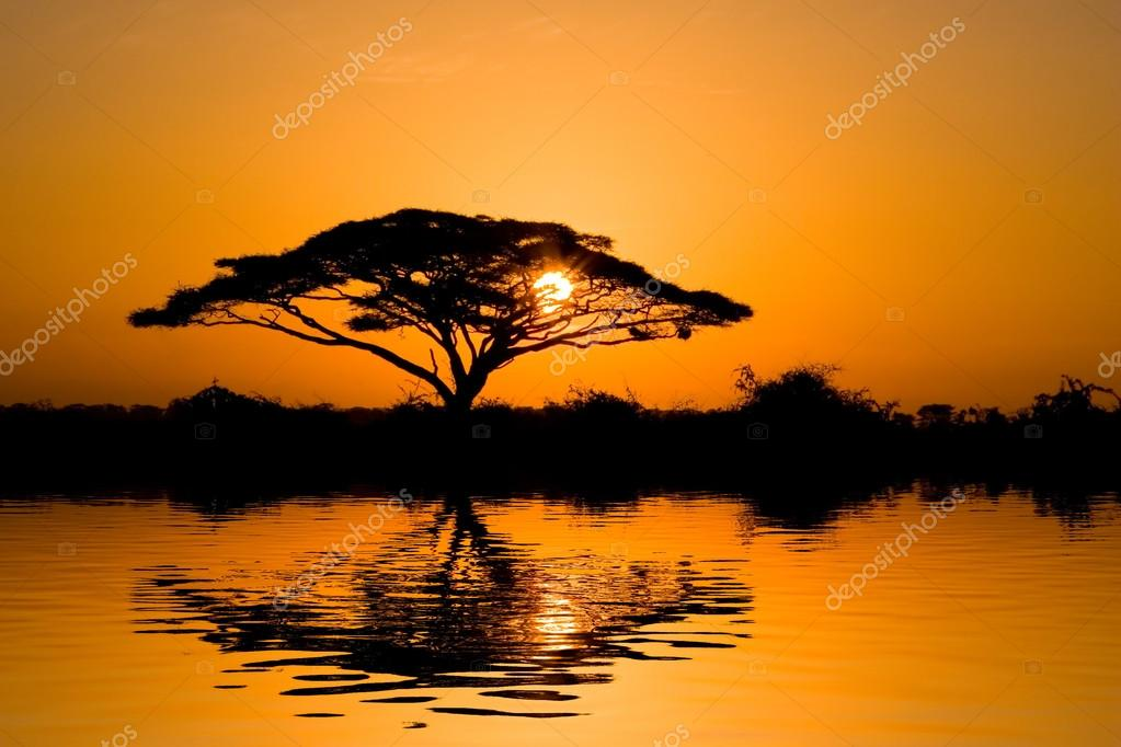Beautiful african sunrise reflected on lake, with backlit acacia tree on Amboseli Natural Park, Kenya.