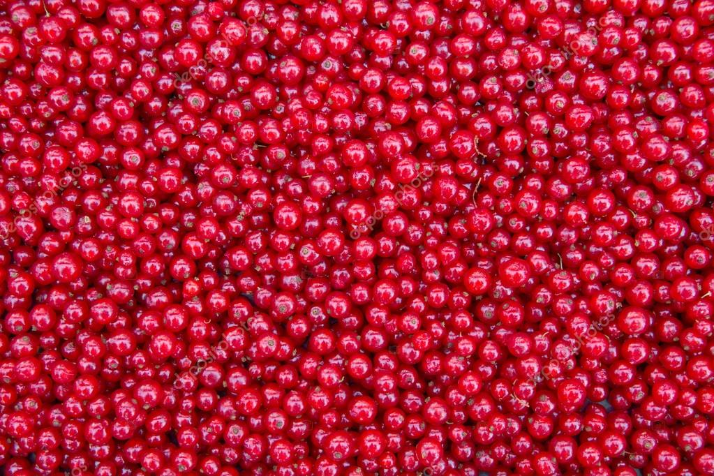 Thousands Of Red Currants