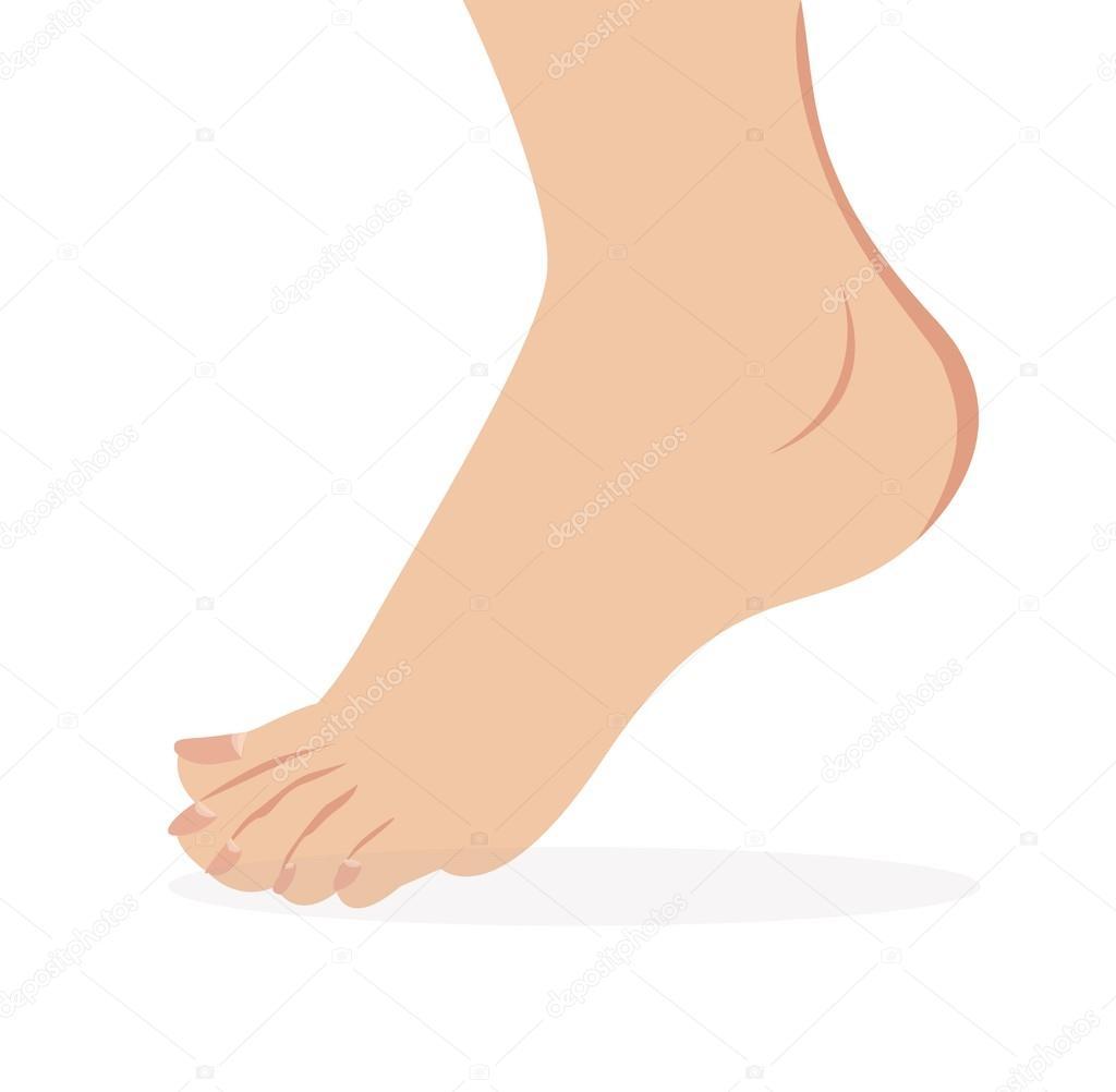 Vector of female foot standing  human foot