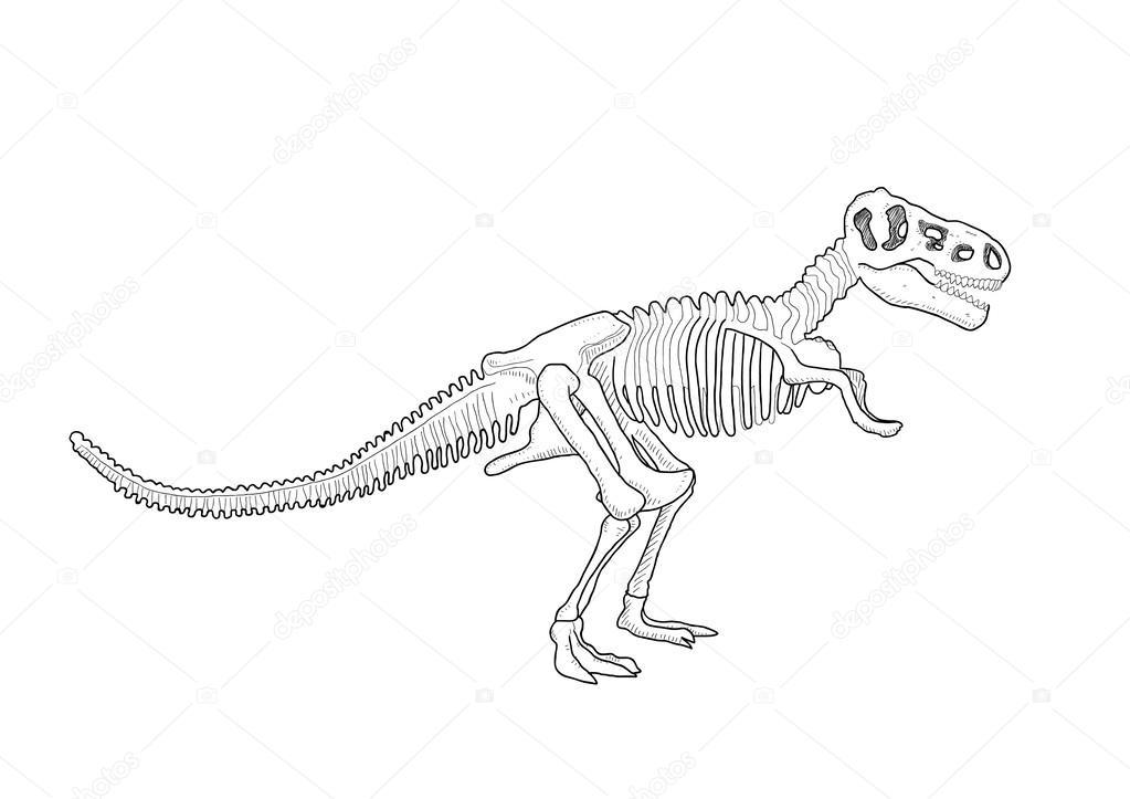 esqueleto del dinosaurio — Archivo Imágenes Vectoriales © orfeev ...
