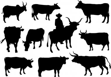Bulls and cows silhouettes