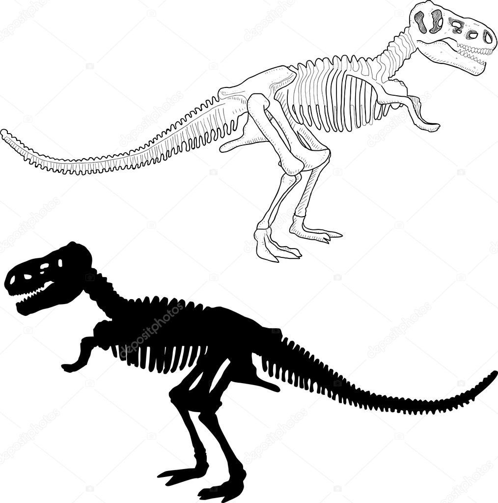 esqueleto del dinosaurio — Vector de stock © orfeev #39907897